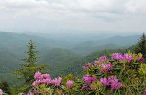 Beautiful wildflowers and the Great Smoky Mountains.