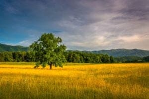 a field in Cades Cove bathed in golden afternoon sunlight