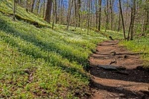 porters creek trail in the smoky mountains